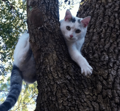 CatInTree
