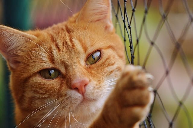 Cat At Fence