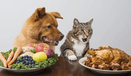 Dog And Cat Looking At Food On Table