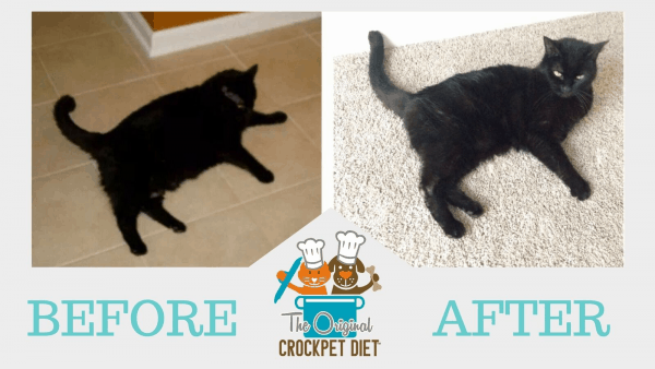 Before and After Cat