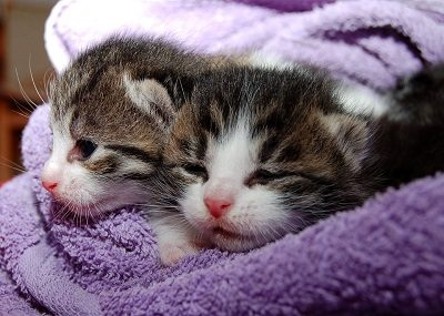 Kittens in a Blanket