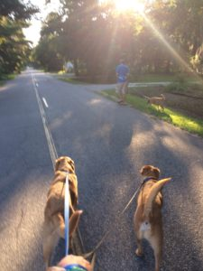 Dogs Run on Leashes