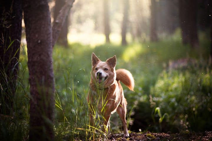Dog Running In Forest