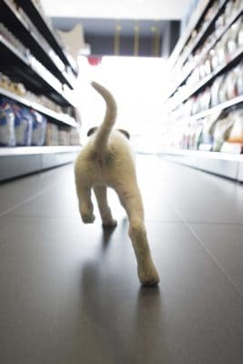 Puppy Running Through Store