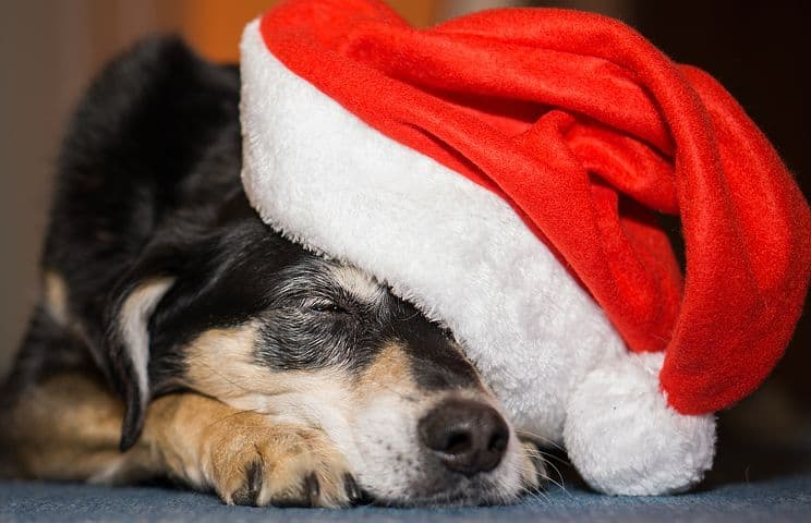 Puppy Sleeping in Santa Hat