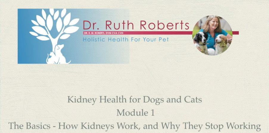 Kidney Health for Dogs and Cats