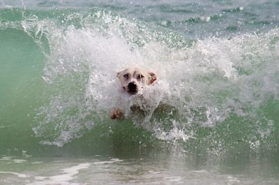 pet water safety - avoid currents and tides
