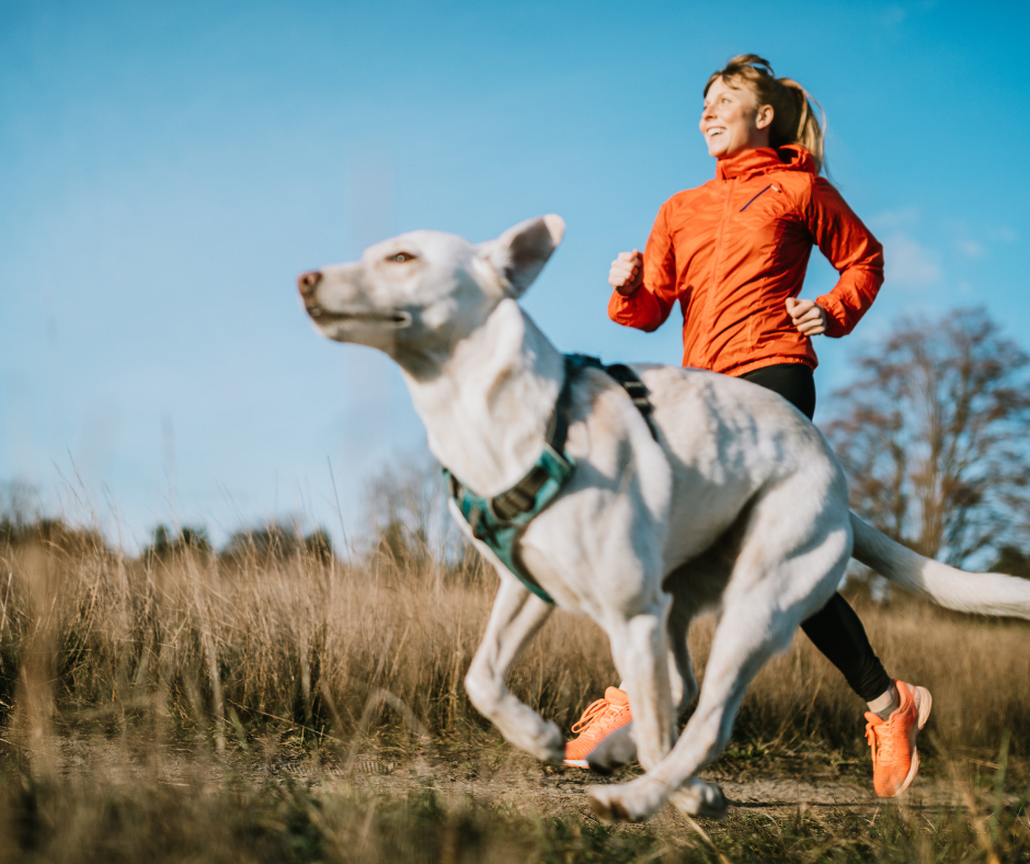 mobility in pets