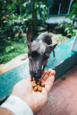 What should you feed your dog?