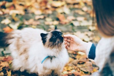 Get help for pets