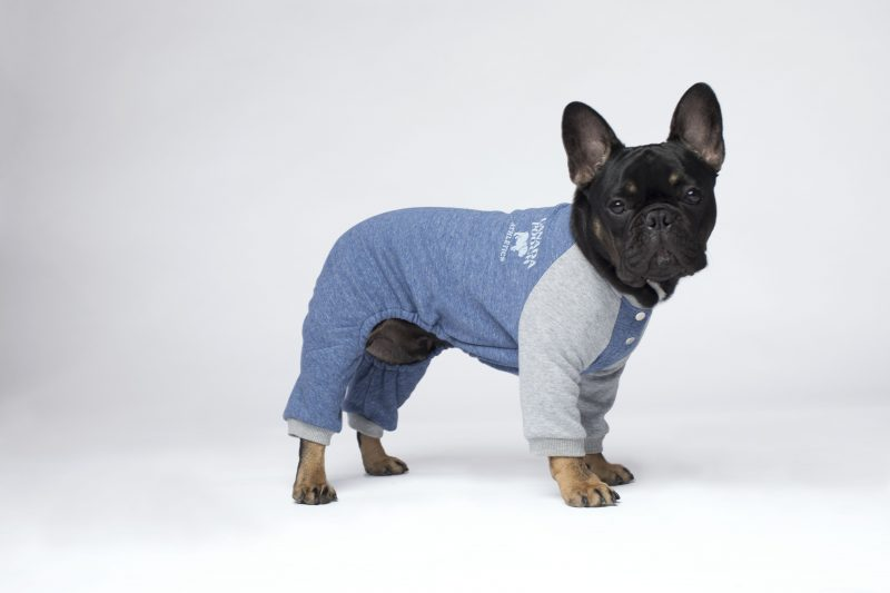 onesies for pets