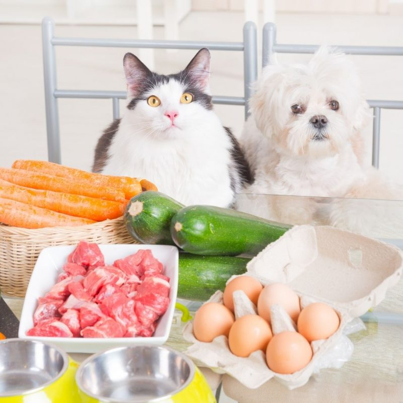 home cooked food for dogs and cats