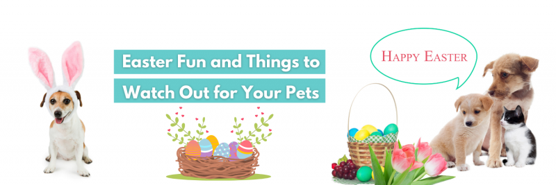 easter with pets