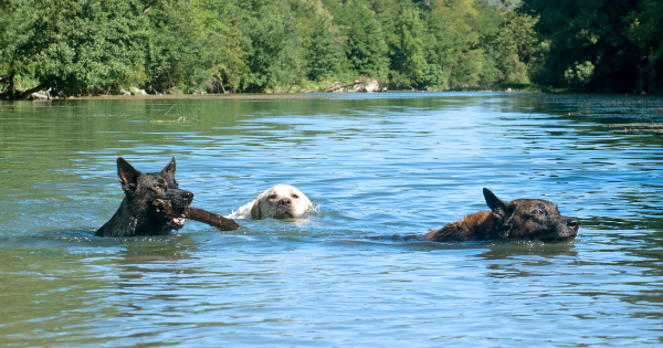 keep your dogs cool in summer