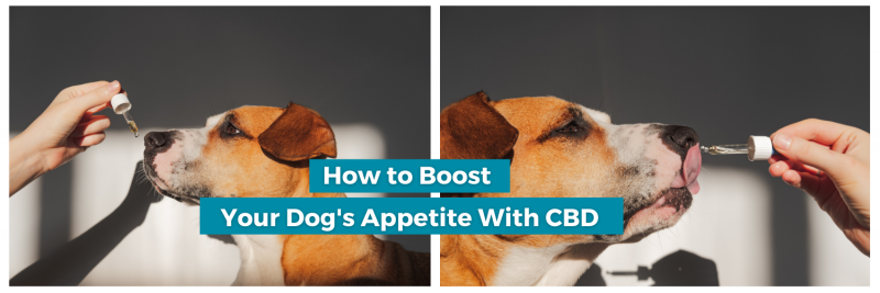 boost dogs appetite with CBD